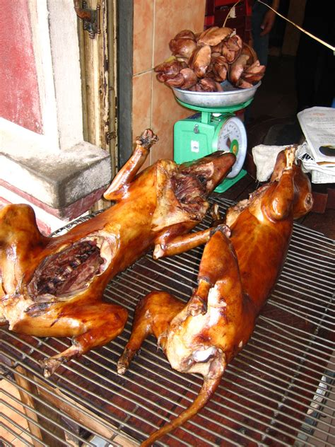 petition: STOP EATING DOGS in Vietnam!!!